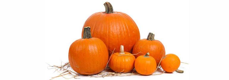 pumpkin pumpkin - halloween song mp3 free download
